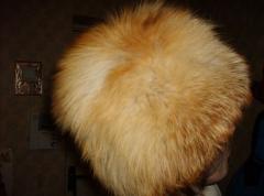 Natural fur red fox