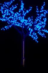 "Tree ""Oriental cherry"" of 1,5 m."