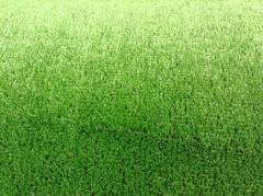 Lawn for soccer