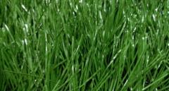 Football lawns
