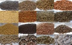 Семена от ТОО «Достык-06»
