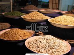 Товарное зерно