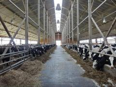 Farms for cows, cowsheds