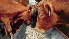 Compound feed for milk cows