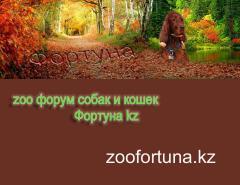 Zoo форум Фортуна кз