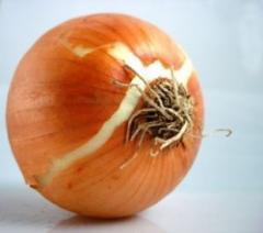 KH onion Mariyam in lots