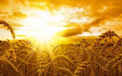 Wheat 3rd class