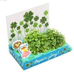 Вырасти удачу Живая открытка Happy Plant наборы