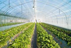 Film for greenhouses and hotbeds