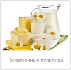 Molokosvyortyvayushchy mikrobialny enzymes