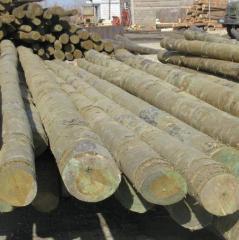 High voltage line columns wooden impregnated