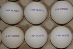 Equipment for marking of eggs