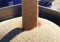 Лучшая пшеница из Казахстана