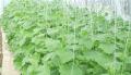 Крючки для подвешивания и регулировки растений теплиц