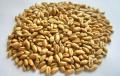 Культуры зерновые на Экспорт