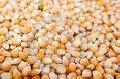 Семена гибрида кукурузы Молдавский 456МВ (ФАО 450)