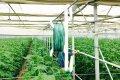 Крючки для подвешивания и регулировки растений / Томатов и огурцов