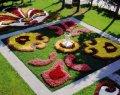 Посадка всех садовых цветов