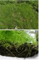 Биомат с семенами трав Арнит