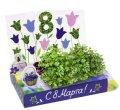 Колокольчики Живая открытка Happy Plant наборы для выращивания