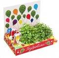 Поздравляю Живая открытка Happy Plant наборы для выращивания