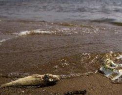 Сильная жара могла стать причиной гибели рыб на Каспии