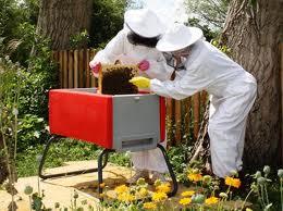 Заказать Разведение пчел