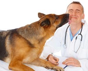 Заказать Услуги ветеринарные