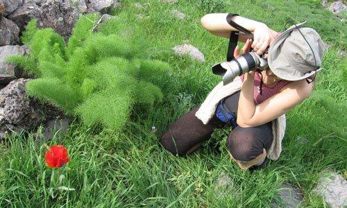 Заказать Тур ботанический пятидневный летний