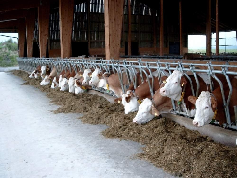 Заказать Консультации по кормлению животных