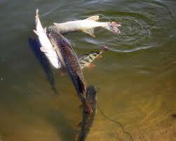Заказать Рыбалка на Балхаше, Казахстан