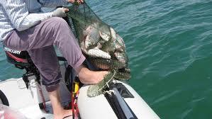 Заказать Рыбалка и отдых