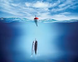 Заказать Рыбалка на рыболовной базе Нептун