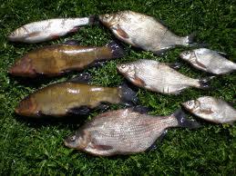Заказать Рыбалка на рыболовной базе