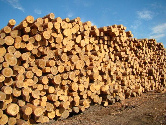 Заказать Закупка леса, древесины компании Алтей.kz