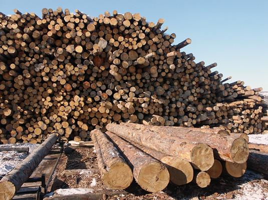 Заказать Переработка древесины компании Алтей.kz