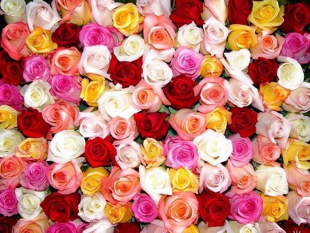 Заказать Доставка цветов в актау