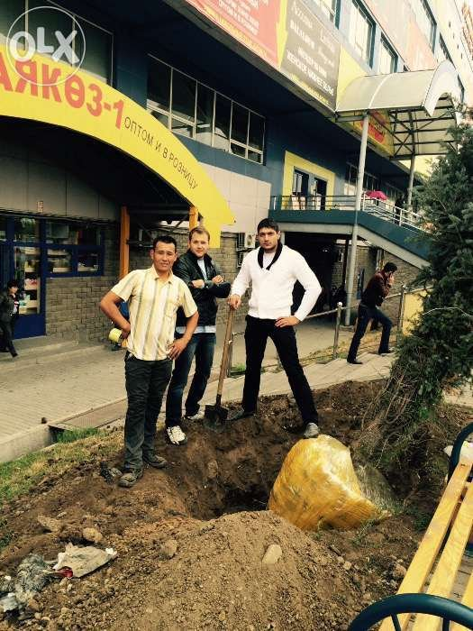 Пересадка деревьев в алматы