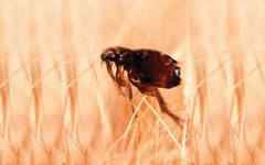 Заказать Услуги по дезинсекции - уничтожению насекомых
