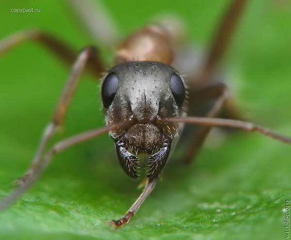 Order Extermination of flies