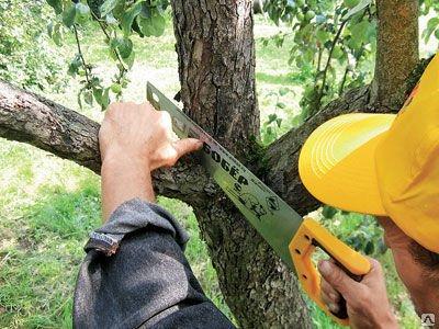 Удаление деревьев в алматы
