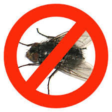 Order Elimination of flies