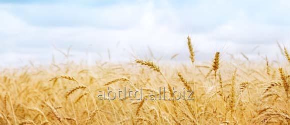 Заказать Выращивание органических культур на заказ