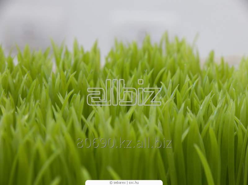Укладка и засыпка искусственной травы