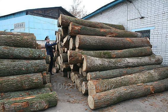 Заказать Инспекция лесных грузов