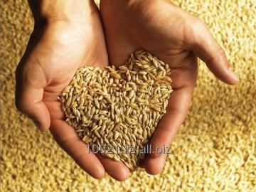Заказать Услуги по грузовому инспектированию зерна