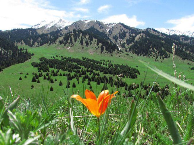 Заказать Национальный парк Иле-Алатауский ГНПП