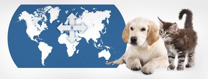 Заказать Перевозка животных домашних