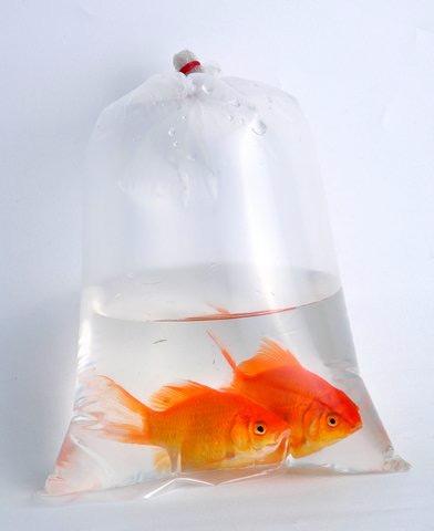 Заказать Транспортировка рыб аквариумных