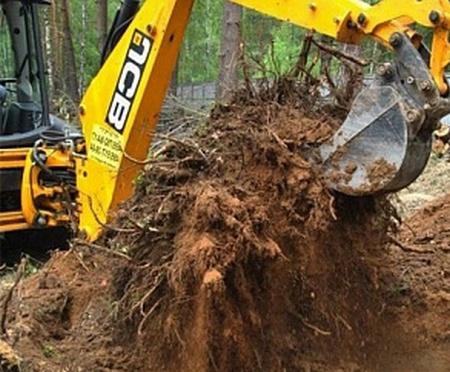 Заказать Удаление деревьев и пней